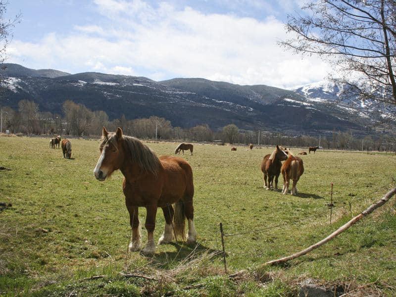 HorsebackRiding6