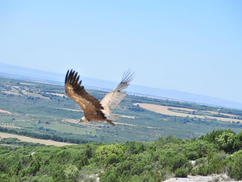 Vultures (3)