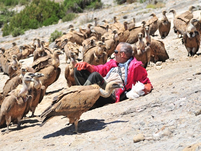 Vultures (4)