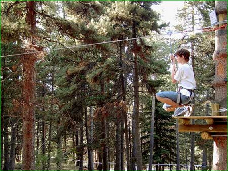 Treetop (2)