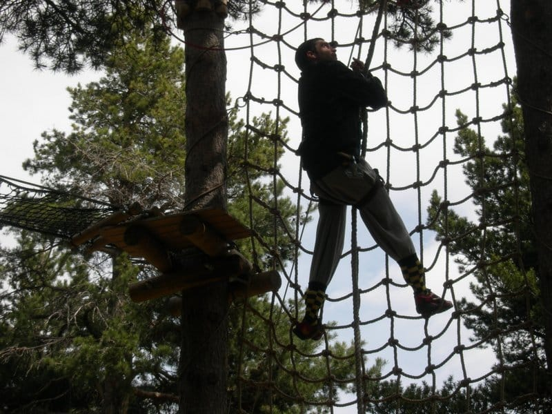 Treetop (3)