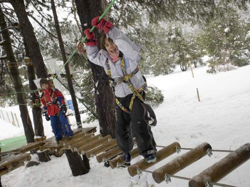 Treetop (4)