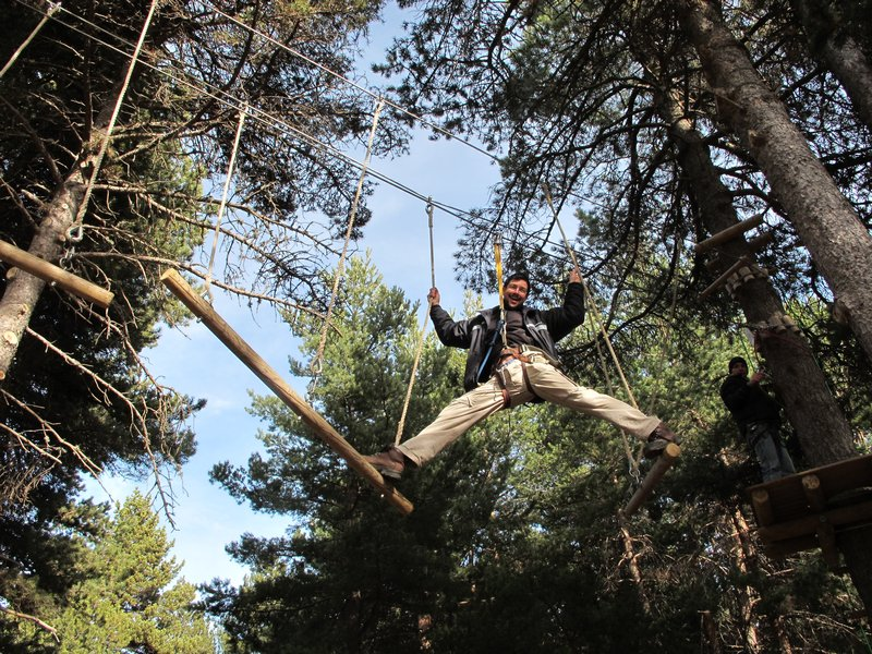 Treetop (7)